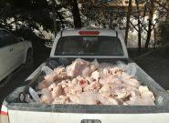 کشف محموله ۴۰۰ کیلو گرمی مرغ غیر قابل مصرف در یاسوج / ضرب و شتم کارشناس دامپزشکی حین انجام وظیفه